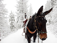 Training Mules while Hunting - Jan 2015