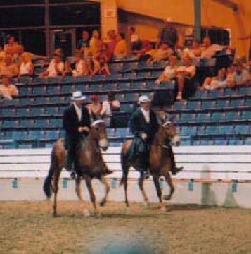 Gaited Mules 1